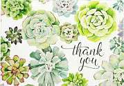Cover of Thank You Cards Succulent Garden