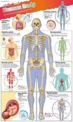 Cover of Human Body Poster - 9780241295830