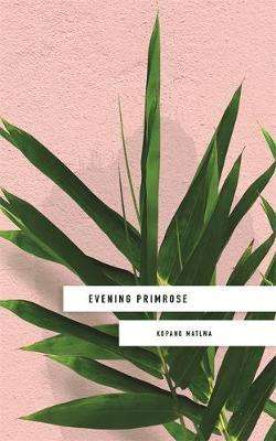 Cover of Evening Primrose - Kopano Matlwa - 9781473662285